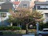 2009_0412aa